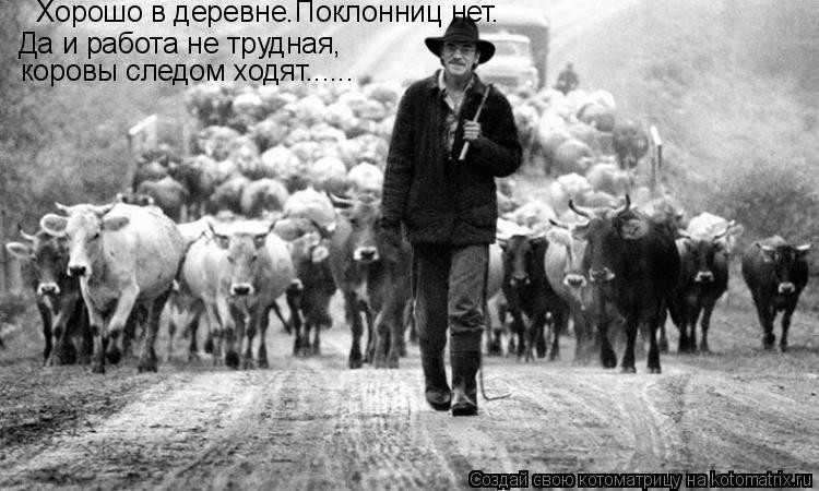Котоматрица: Хорошо в деревне.Поклонниц нет. Да и работа не трудная, коровы следом ходят......