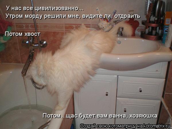 Котоматрица: У нас все цивилизованно... Потом...щас будет вам ванна, хозяюшка Потом хвост Утром морду решили мне, видите ли, отдраить