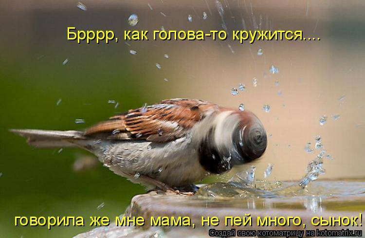 Котоматрица: Брррр, как голова-то кружится.... говорила же мне мама, не пей много, сынок!
