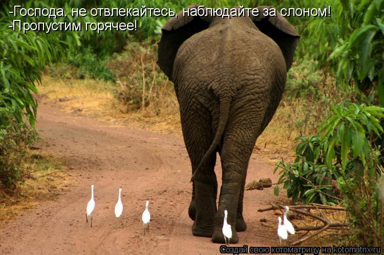 Котоматрица: -Господа. не отвлекайтесь, наблюдайте за слоном! -Пропустим горячее!
