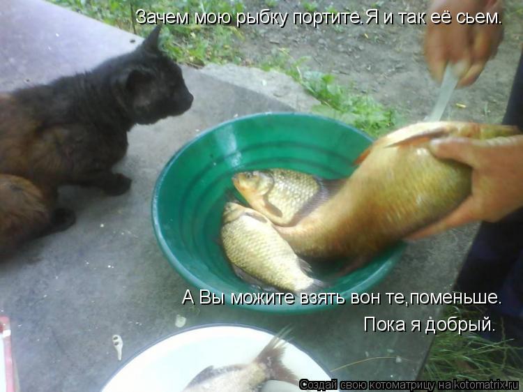 Котоматрица: Зачем мою рыбку портите.Я и так её сьем. А Вы можите взять вон те,поменьше. Пока я добрый.