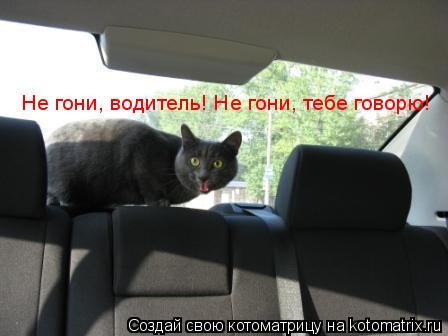 Котоматрица: Не гони, водитель! Не гони, тебе говорю! Не гони, водитель! Не гони, тебе говорю!