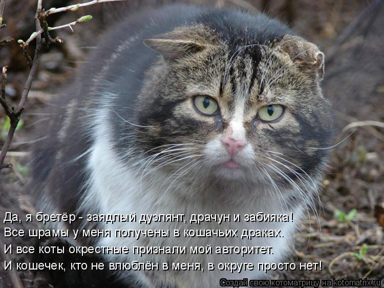 Котоматрица: Все шрамы у меня получены в кошачьих драках. И все коты окрестные признали мой авторитет. И кошечек, кто не влюблён в меня, в округе просто не