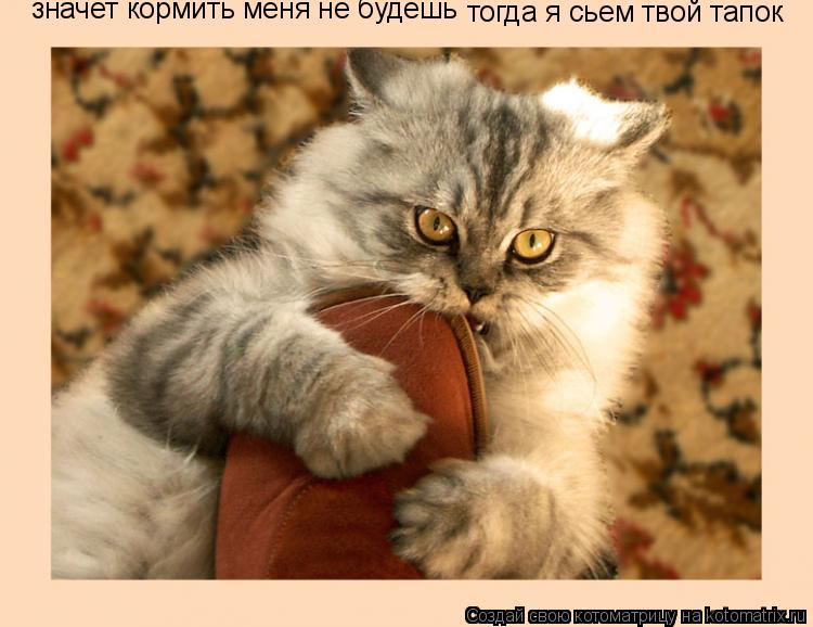 Котоматрица: значет кормить меня не будешь тогда я сьем твой тапок