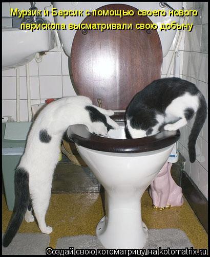 Котоматрица: Мурзик и Барсик с помощью своего нового перископа высматривали свою добычу