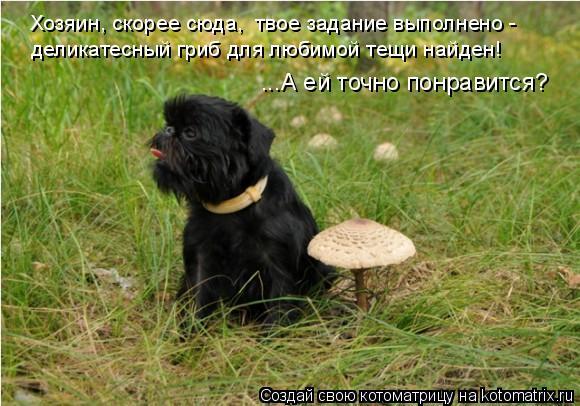 Котоматрица: Хозяин, скорее сюда,  твое задание выполнено - деликатесный гриб для любимой тещи найден!  ...А ей точно понравится?
