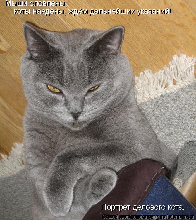 Котоматрица: Мыши словлены, коты наедены, ждём дальнейших указаний! Портрет делового кота.