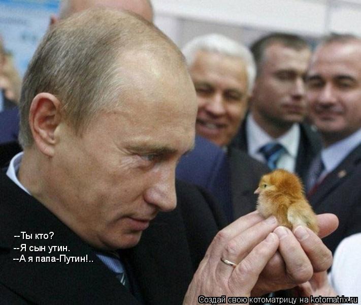 Котоматрица: --Ты кто? --Я сын утин. --А я папа-Путин!..