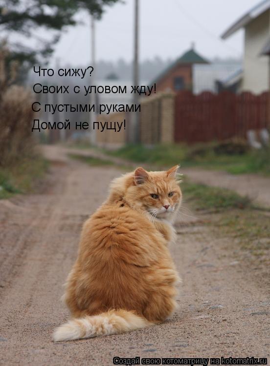 Котоматрица: Что сижу? Своих с уловом жду! С пустыми руками Домой не пущу!