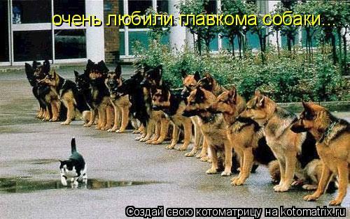 Котоматрица: очень любили главкома собаки...