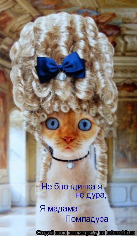 Котоматрица: Не блондинка я,  не дура, Я мадама Помпадура