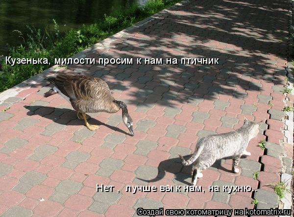 Котоматрица: Кузенька, милости просим к нам на птичник Нет ,  лучше вы к нам, на кухню..
