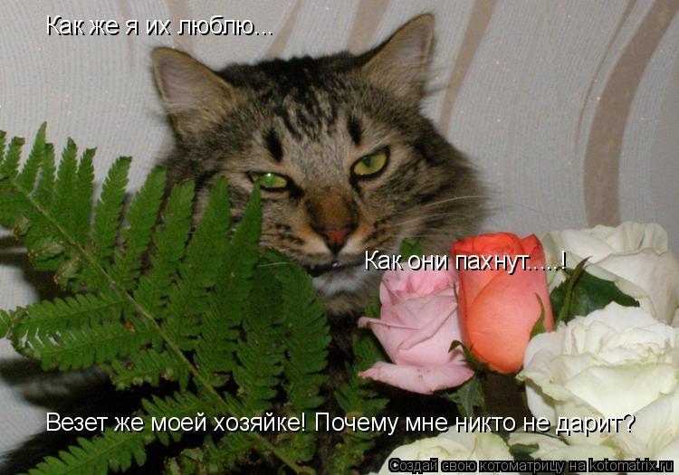 Котоматрица: Как же я их люблю... Как они пахнут.....! Везет же моей хозяйке! Почему мне никто не дарит?