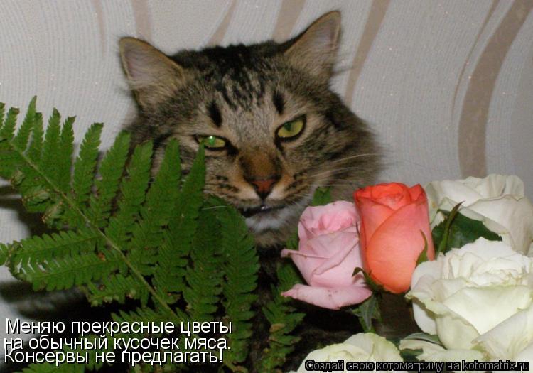 Котоматрица: Меняю прекрасные цветы на обычный кусочек мяса. Консервы не предлагать!