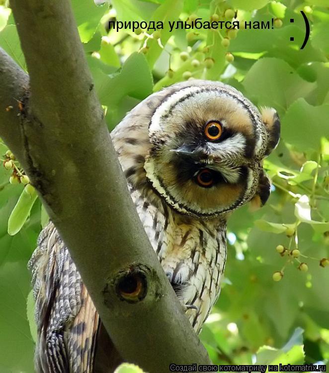 Котоматрица: :)  природа улыбается нам!