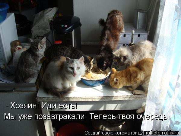 Котоматрица: - Хозяин! Иди есть! Мы уже позавтракали! Теперь твоя очередь!