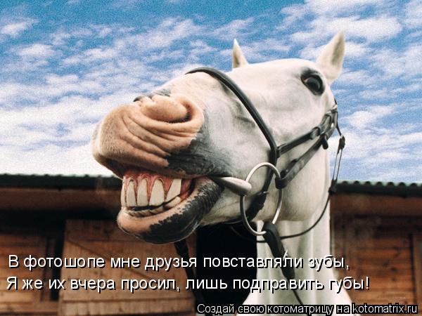 Котоматрица: В фотошопе мне друзья повставляли зубы, Я же их вчера просил, лишь подправить губы!