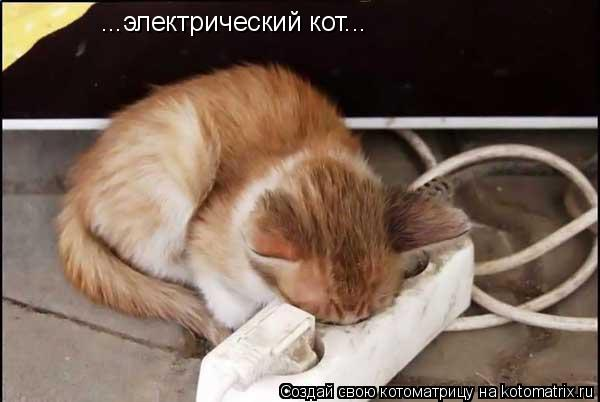 Котоматрица: ...электрический кот...