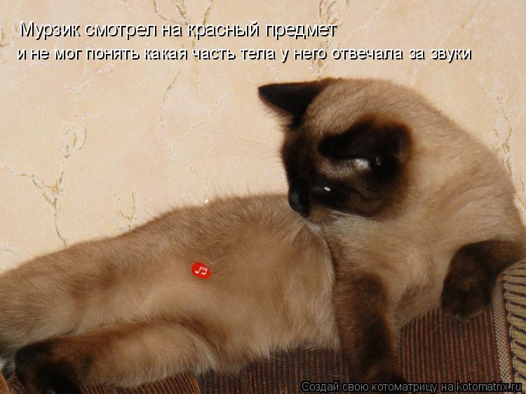 Котоматрица: Мурзик смотрел на красный предмет  и не мог понять какая часть тела у него отвечала за звуки