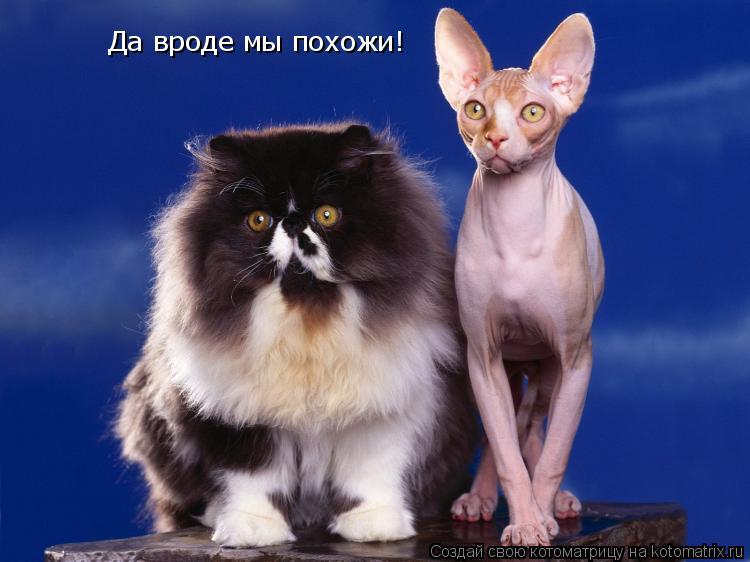 Котоматрица: Да вроде мы похожи!