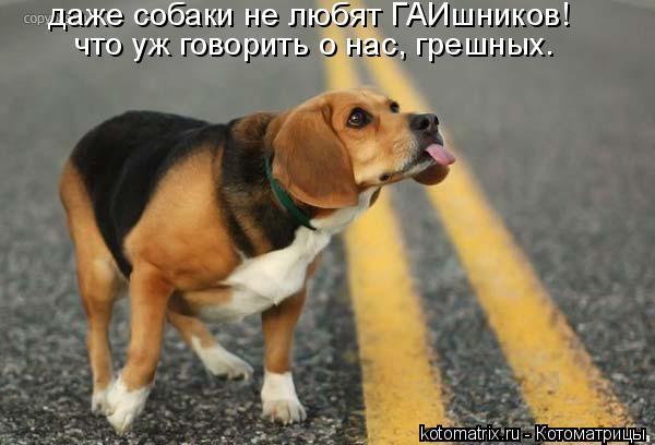 Котоматрица: даже собаки не любят ГАИшников! что уж говорить о нас, грешных.