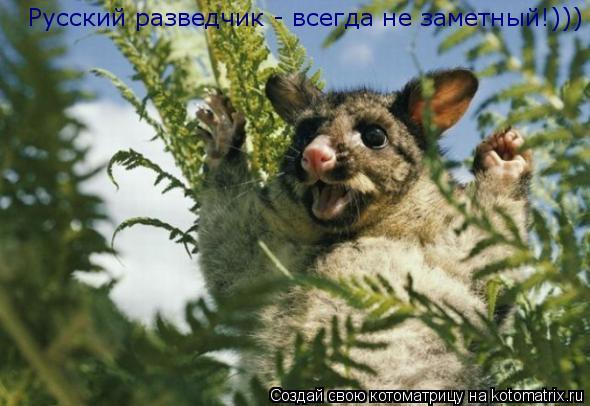 Котоматрица: Русский разведчик - всегда не заметный!)))