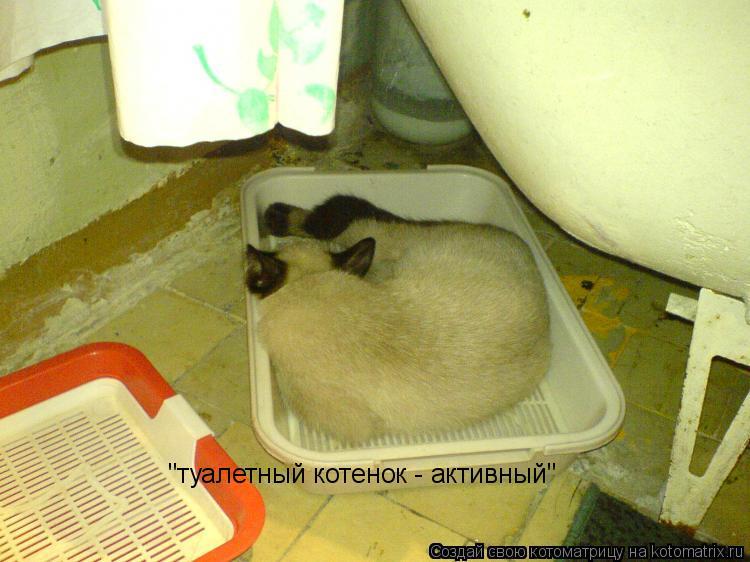 """Котоматрица: """"туалетный котенок - активный"""""""