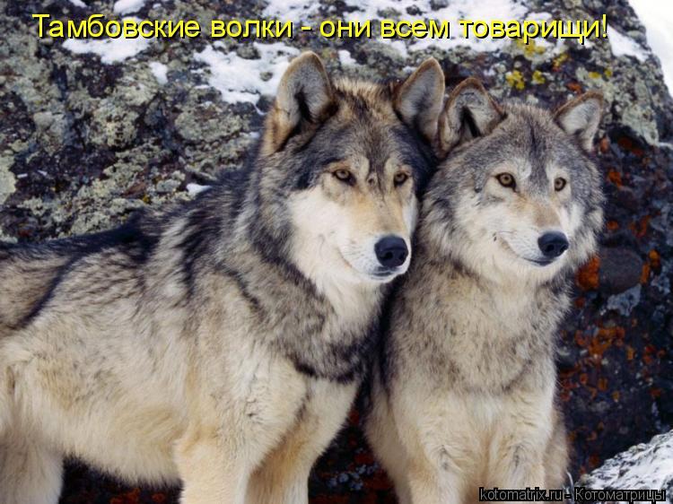 Котоматрица: Тамбовские волки - они всем товарищи!