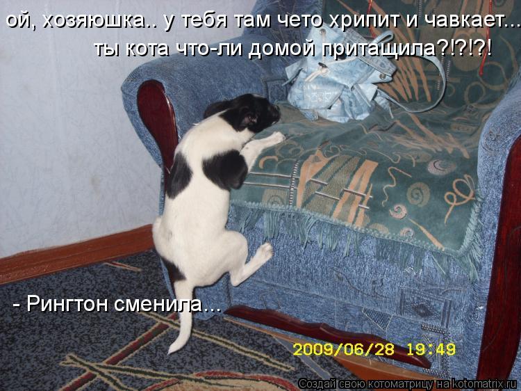 Котоматрица: ой, хозяюшка.. у тебя там чето хрипит и чавкает... ты кота что-ли домой притащила?!?!?! - Рингтон сменила...