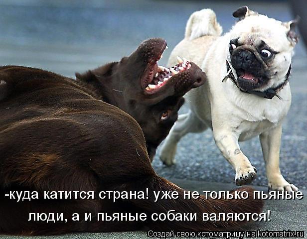 Котоматрица: -куда катится страна! уже не только пьяные  люди, а и пьяные собаки валяются!