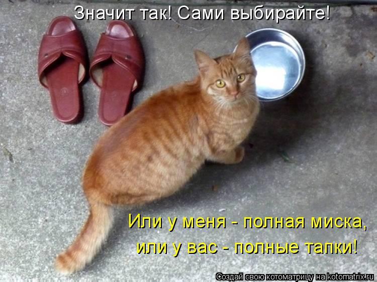 Котоматрица: Значит так! Сами выбирайте! Или у меня - полная миска, или у вас - полные тапки!