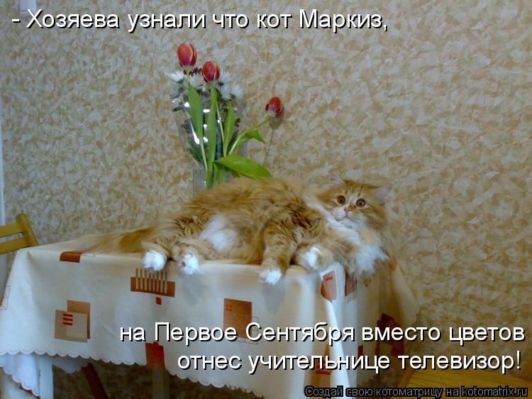 Котоматрица: - Хозяева узнали что кот Маркиз, отнес учительнице телевизор! на Первое Сентября вместо цветов