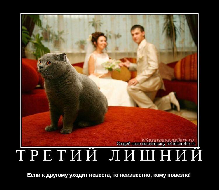Котоматрица: третий лишний Если к другому уходит невеста, то неизвестно, кому повезло!