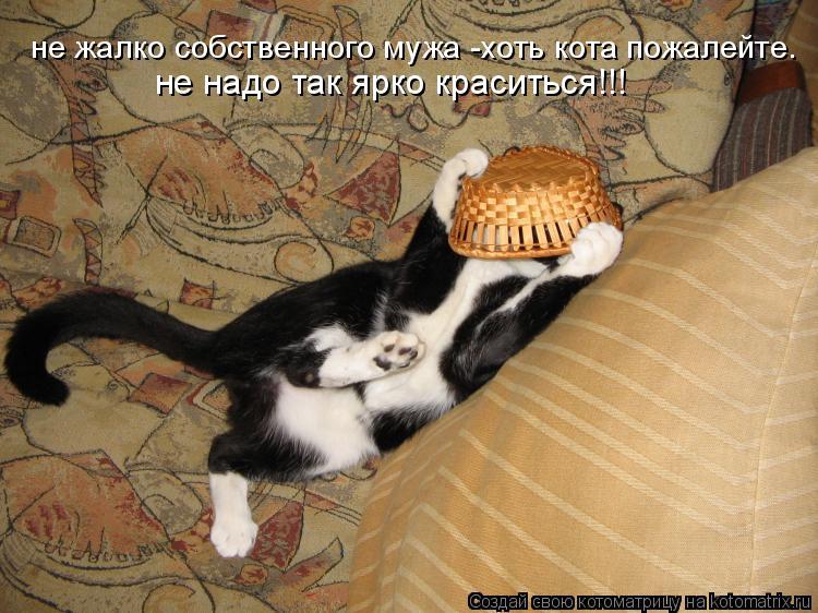 Котоматрица: не жалко собственного мужа -хоть кота пожалейте. не надо так ярко краситься!!!