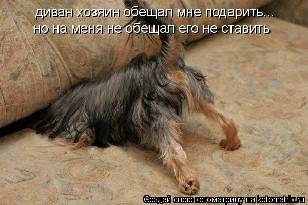 Котоматрица: но на меня не обещал его не ставить диван хозяин обещал мне подарить...