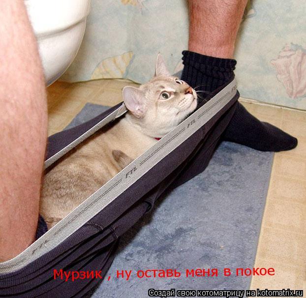 Котоматрица: Мурзик , ну оставь меня в покое