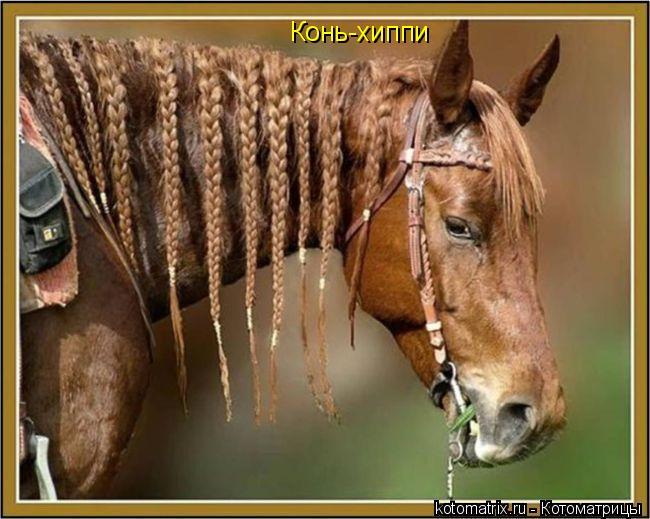Котоматрица: Конь-хиппи