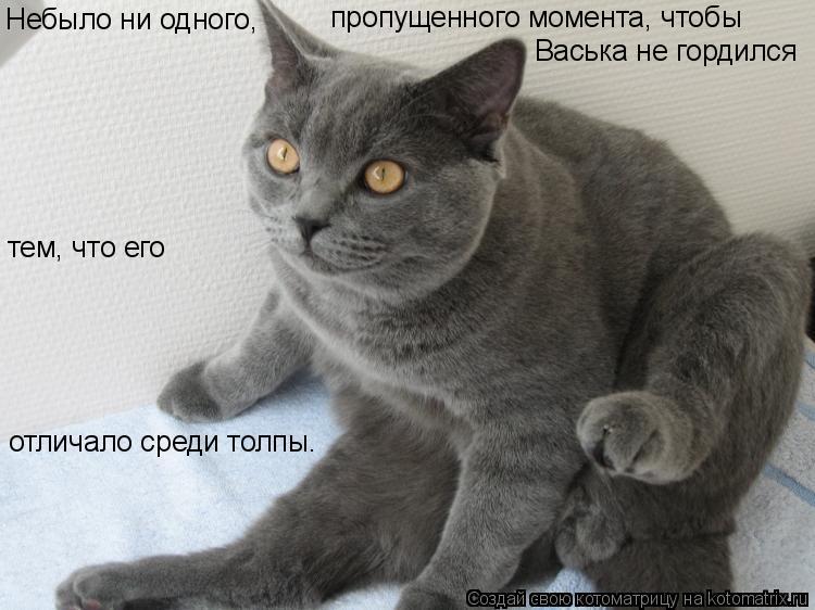 Котоматрица: Небыло ни одного,  пропущенного момента, чтобы Васька не гордился тем, что его отличало среди толпы.