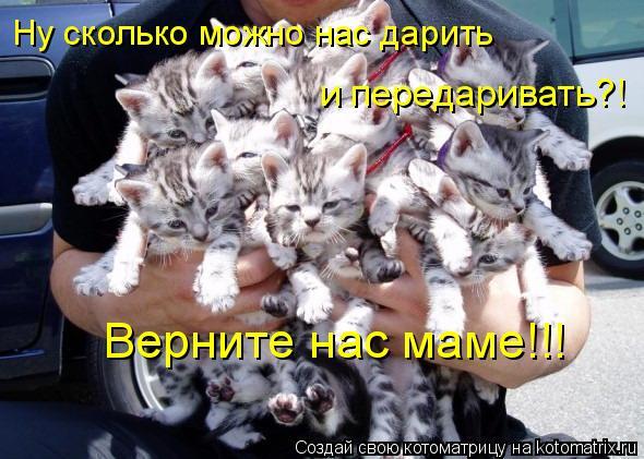 Котоматрица: Ну сколько можно нас дарить  и передаривать?! Верните нас маме!!!