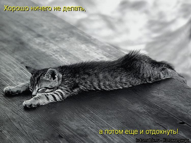 Котоматрица: Хорошо ничего не делать, а потом еще и отдохнуть!