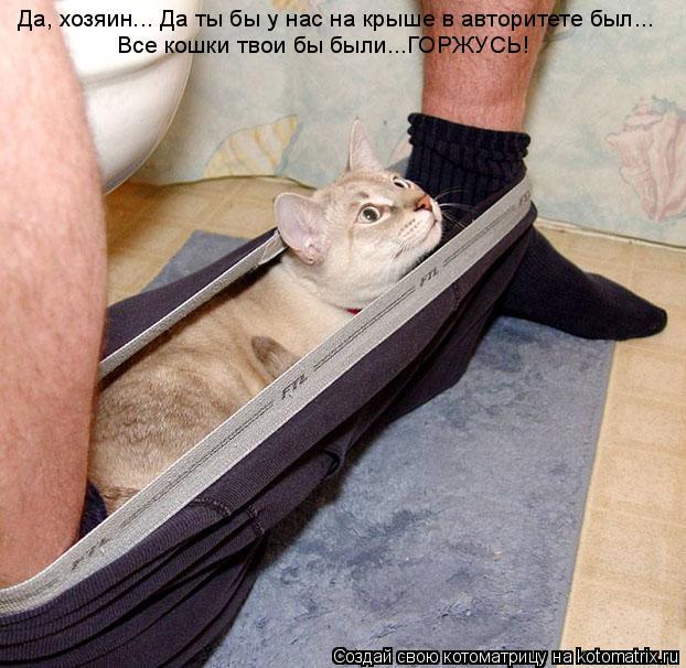 Котоматрица: Да, хозяин... Да ты бы у нас на крыше в авторитете был... Все кошки твои бы были...ГОРЖУСЬ!