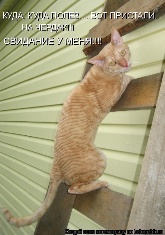 Котоматрица: КУДА, КУДА ПОЛЕЗ.....ВОТ ПРИСТАЛИ... НА ЧЕРДАК!!! СВИДАНИЕ У МЕНЯ!!!!