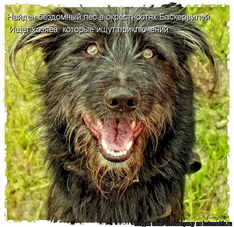 Котоматрица: Найден бездомный пес в окрестностях Баскервилей Ищет хозяев, которые ищут приключений