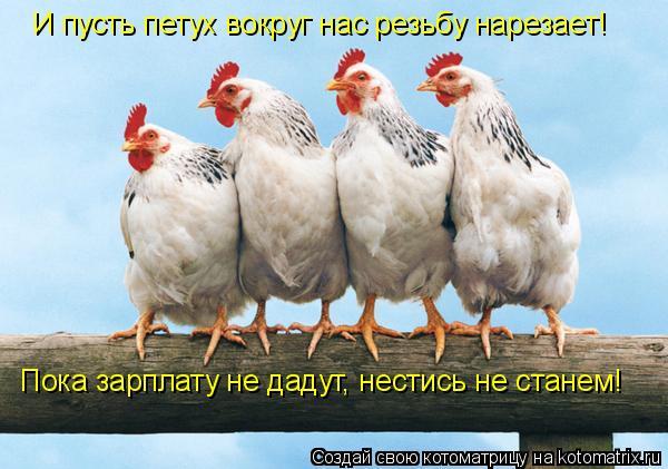 Котоматрица: И пусть петух вокруг нас резьбу нарезает!   Пока зарплату не дадут, нестись не станем!