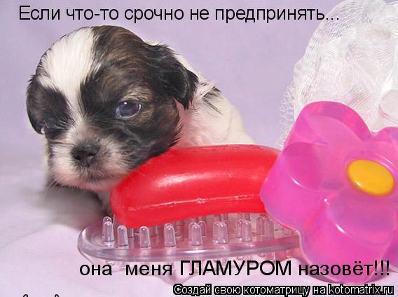 Котоматрица: Если что-то срочно не предпринять... она  меня ГЛАМУРОМ назовёт!!!