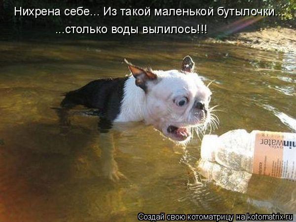 Котоматрица: Нихрена себе... Из такой маленькой бутылочки... ...столько воды вылилось!!!