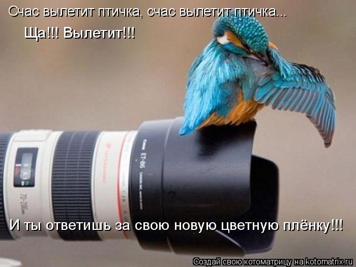 Котоматрица: Счас вылетит птичка, счас вылетит птичка... Ща!!! Вылетит!!!  И ты ответишь за свою новую цветную плёнку!!!