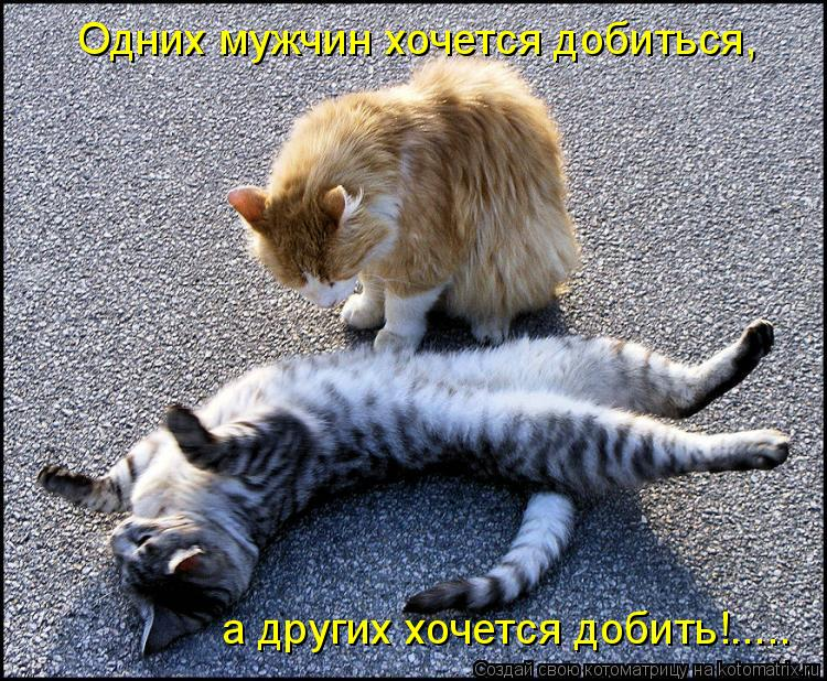 Котоматрица: Одних мужчин хочется добиться, а других хочется добить!.....