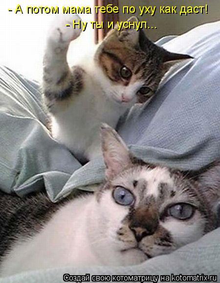 Котоматрица: - А потом мама тебе по уху как даст! - Ну ты и уснул...