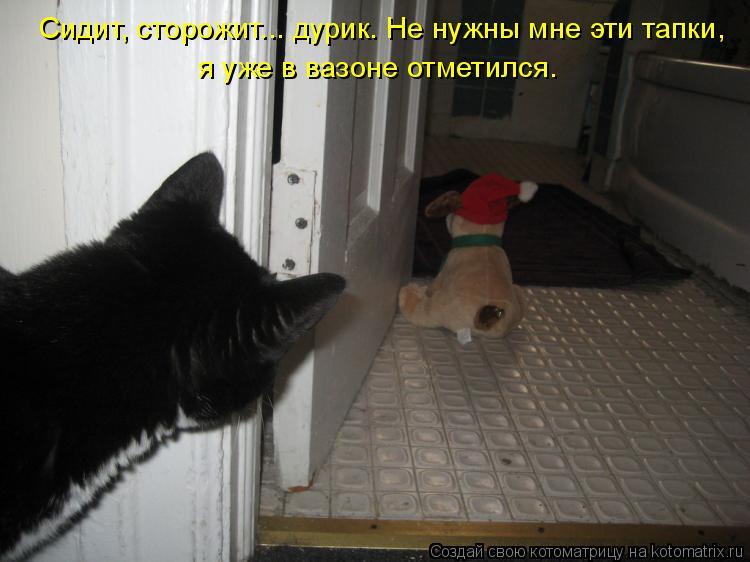 Котоматрица: Сидит, сторожит... дурик. Не нужны мне эти тапки, я уже в вазоне отметился.